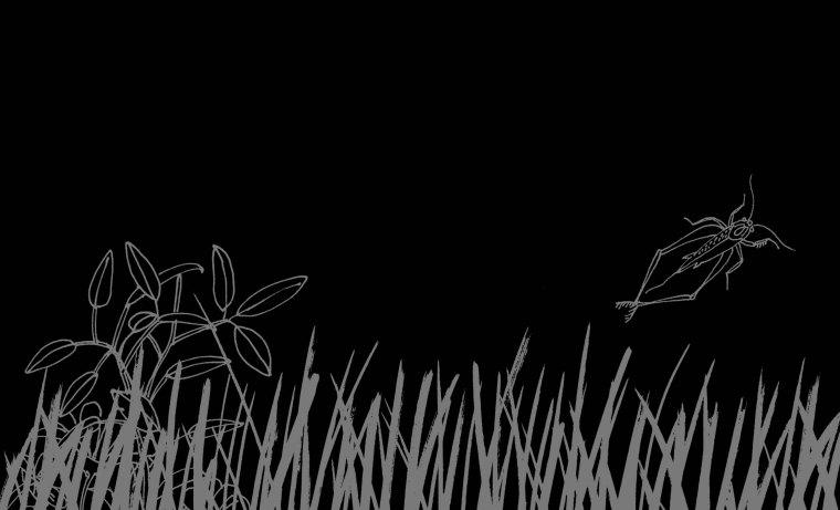 libro negro tecolote-1