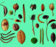 Botánica poética índice