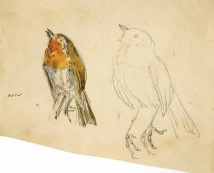 Bocetos e ilustraciones originales de Beatrix Potter