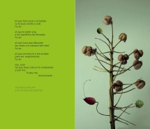 Botánica poética_Juan Lima 4