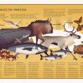 Animales en marcha mundonatural