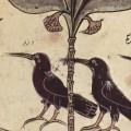 Cuervos panchatantra