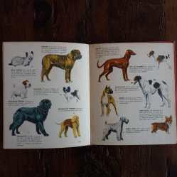 Gatos perros y caballos int3